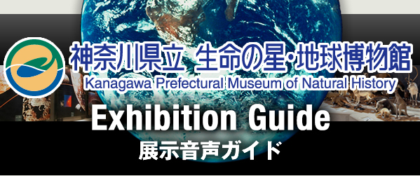 Kanagawa Prefectural Museum of Natural History
